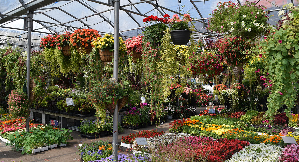 Hanging plants and flowers for sale in a market