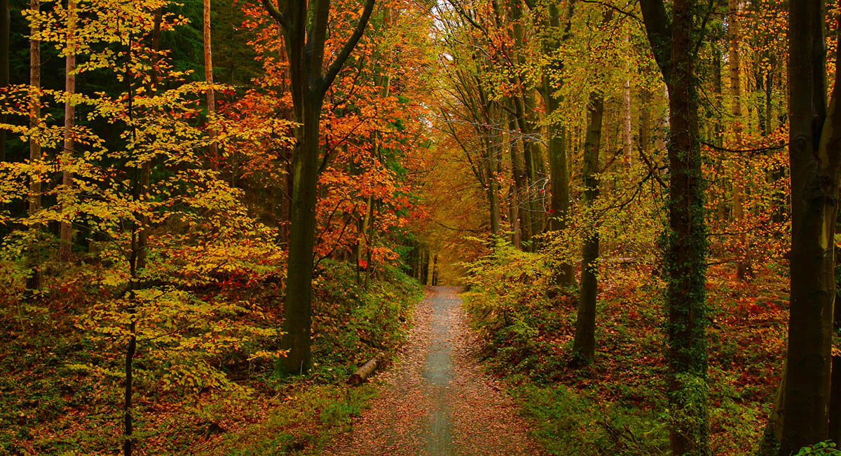 A path in autumn woods