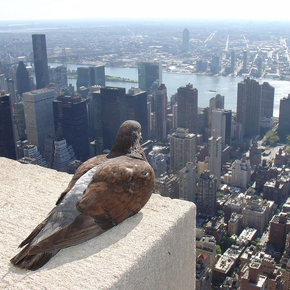 Pigion perched on tall building overlooking a city