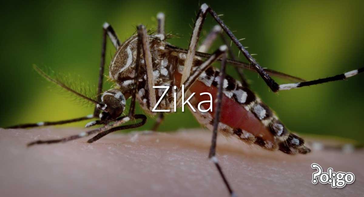 A moquito